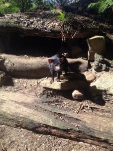 We went to the Tasmanian Devil Park!
